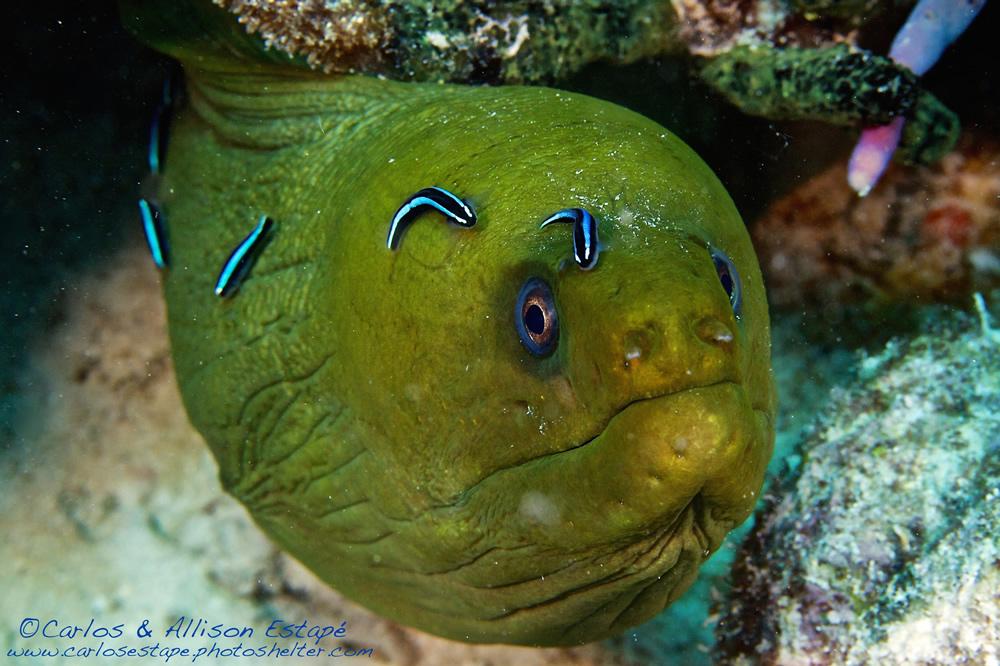 Dive Sites In The Florida Keys And Islamorada: Key Dives