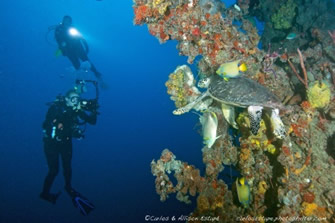 The Eagle Wreck Dives in Florida Keys